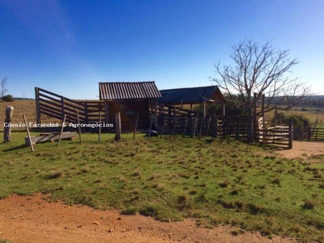 Fazenda para venda em encruzilhada do sul, interior - Foto 15