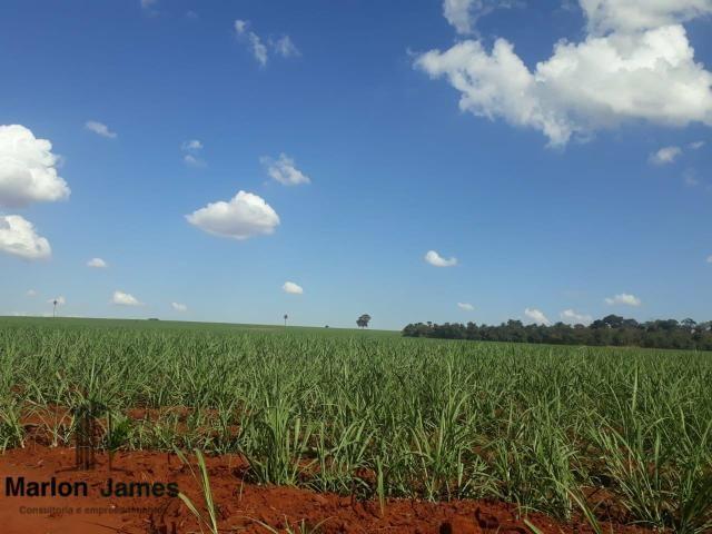 Fazenda para Plantio em Quirinópolis-GO! - Foto 9