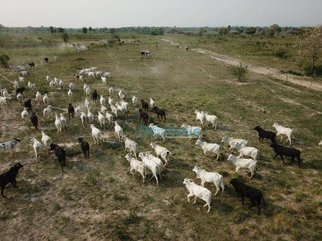 Fazenda a venda - área rural - Foto 2
