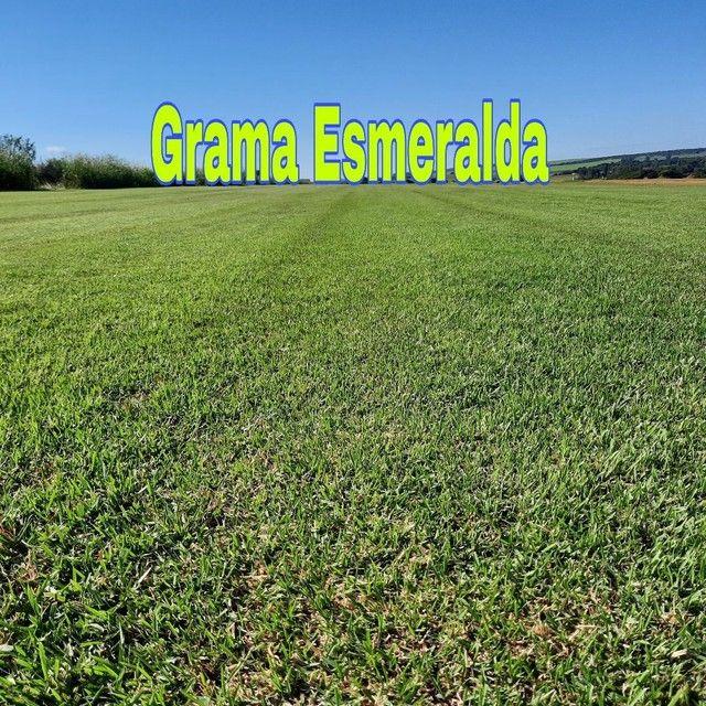 Grama são Carlos,Grama Esmeralda  - Foto 6