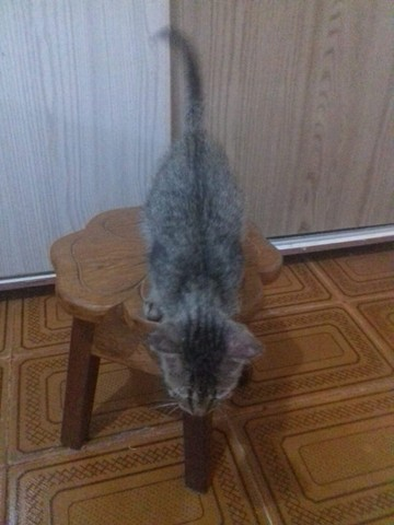 Doa-se gatinha filhote - Foto 2
