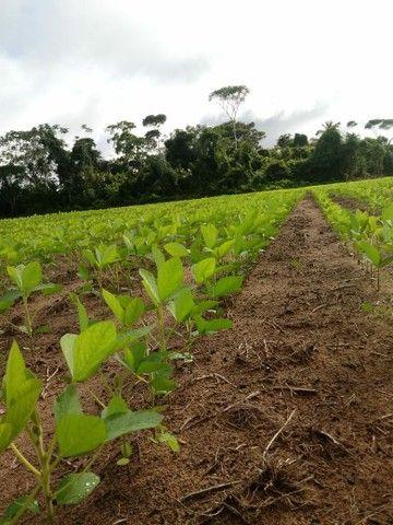 Fazenda em Rondônia próximo à Porto Velho  - Foto 5
