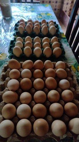 Ovos galinha capoeira e temos também galados  - Foto 2
