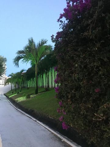 Terra Brasilis na Alameda das Árvores