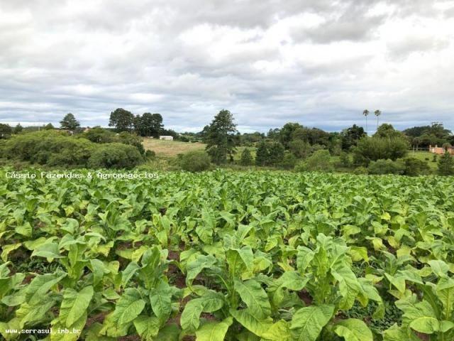 Fazenda para venda em encruzilhada do sul, interior - Foto 12