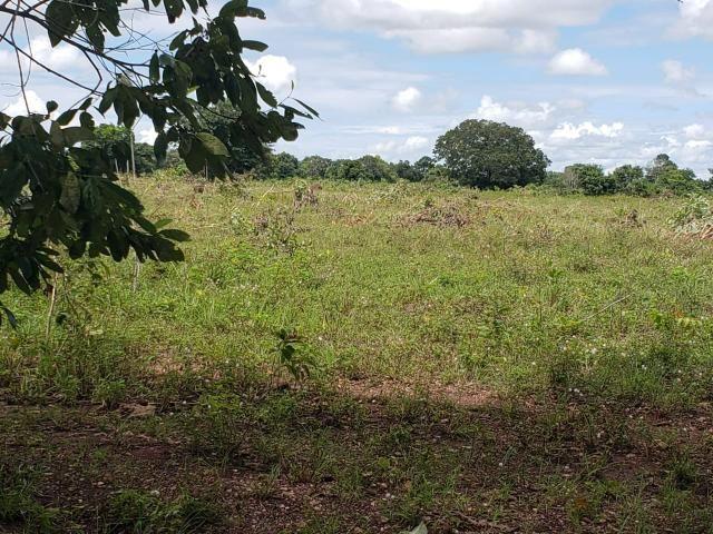 Fazenda 1.240 hectares á venda em jangada - Foto 8