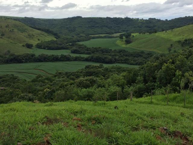 Fazenda rural à venda em Roncador - PR - 52 alqueires. - Foto 14