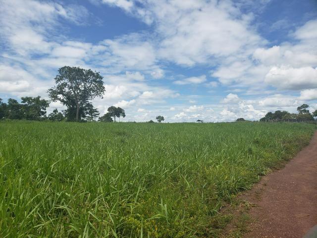 Fazenda 1.240 hectares á venda em jangada