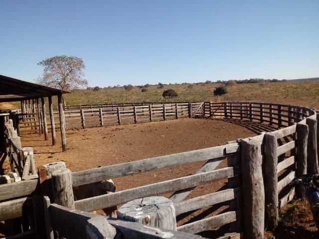Fazenda para Pecuária 1.940 hectares na Estrada do Manso 50 km Cuiabá - Foto 8