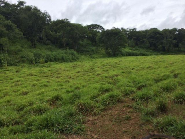 Fazenda rural à venda em Roncador - PR - 52 alqueires. - Foto 7