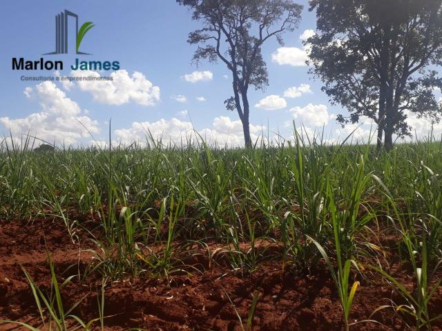Fazenda para Plantio em Quirinópolis-GO! - Foto 5