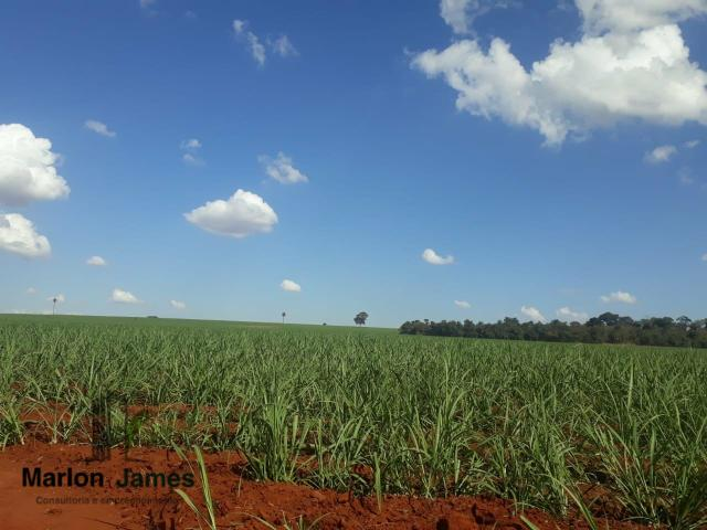 Fazenda para Plantio em Quirinópolis-GO! - Foto 8