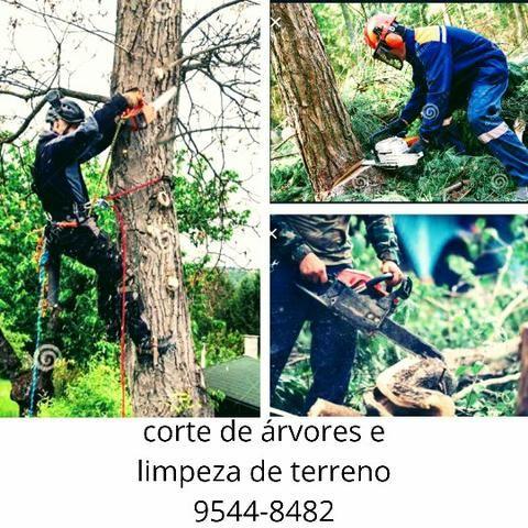 150 corte de árvores *