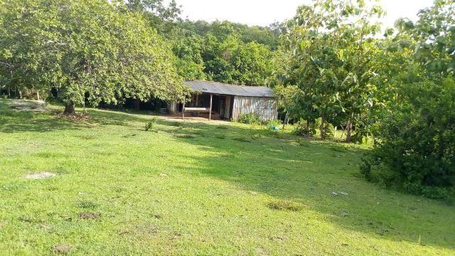 Fazenda 1450 hectare - Foto 6