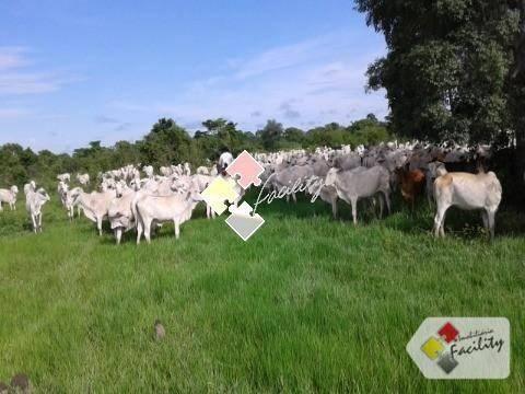 Fazenda rural à venda, zona rural, poconé - . - Foto 11