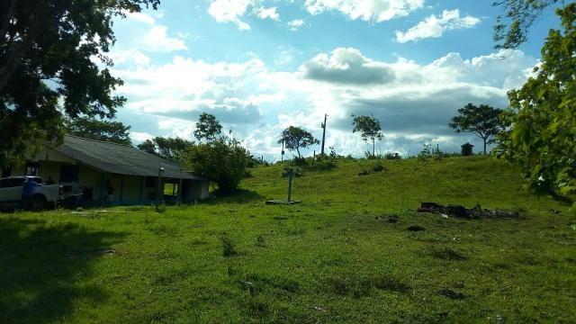 Fazenda 1450 hectare - Foto 5