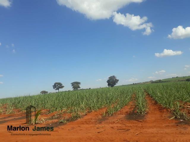 Fazenda para Plantio em Quirinópolis-GO! - Foto 14