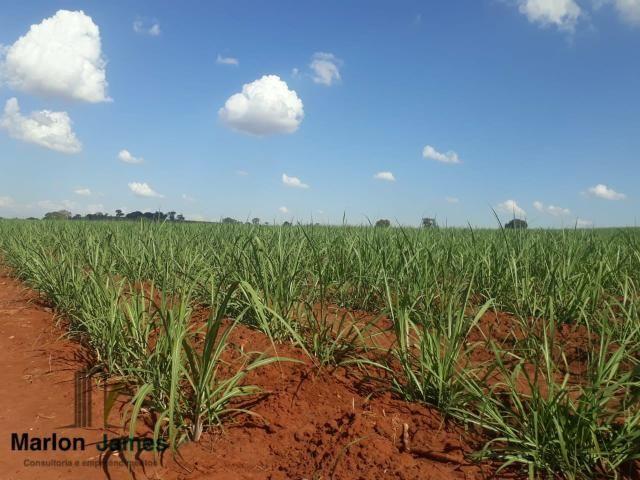 Fazenda para Plantio em Quirinópolis-GO! - Foto 4
