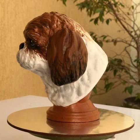 Shih-Tzu Dog - Head - Foto 2