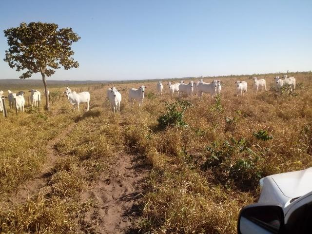 Fazenda para Pecuária 1.940 hectares na Estrada do Manso 50 km Cuiabá - Foto 13