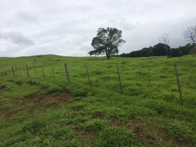 Fazenda rural à venda em Roncador - PR - 52 alqueires. - Foto 6