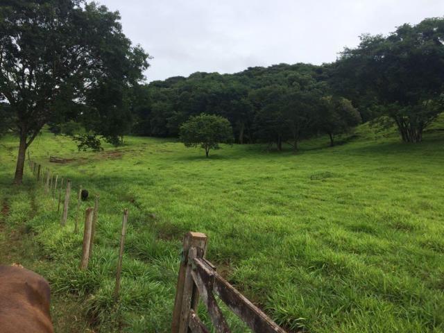 Fazenda rural à venda em Roncador - PR - 52 alqueires. - Foto 15
