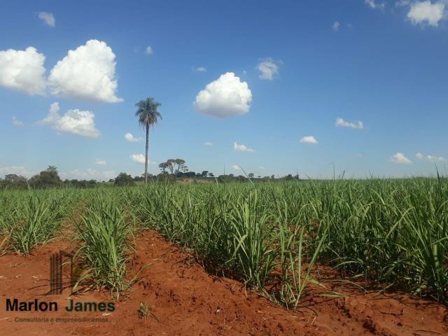 Fazenda para Plantio em Quirinópolis-GO! - Foto 3