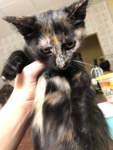 Doação de gatinha - Foto 4
