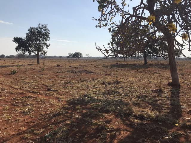 Fazenda 1.240 hectares á venda em jangada - Foto 10