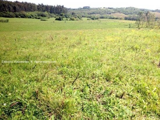 Fazenda para venda em encruzilhada do sul, interior - Foto 2