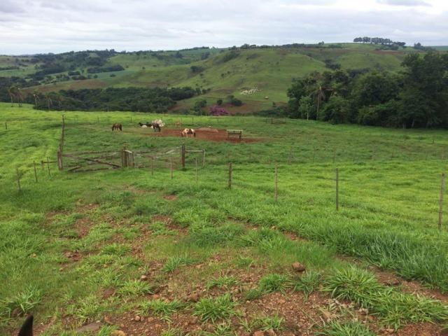Fazenda rural à venda em Roncador - PR - 52 alqueires. - Foto 3
