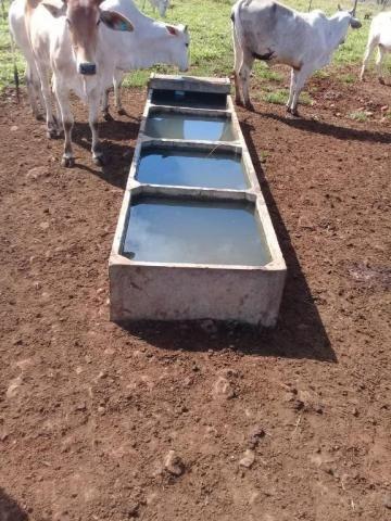 Fazenda rural à venda em Roncador - PR - 52 alqueires. - Foto 20
