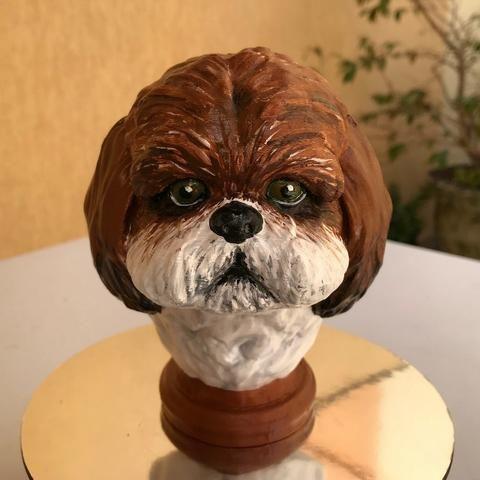 Shih-Tzu Dog - Head
