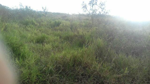Terreno perto do Vitorino município de riacho das Almas - Foto 3