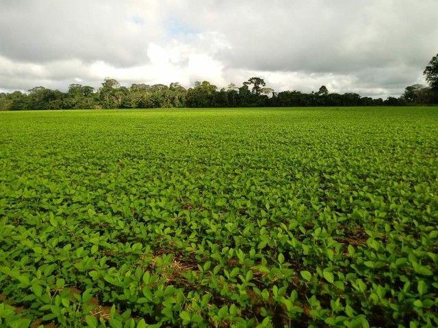 Fazenda em Rondônia próximo à Porto Velho  - Foto 3