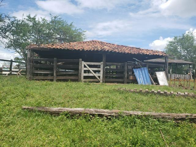 Fazenda 1.240 hectares á venda em jangada - Foto 9