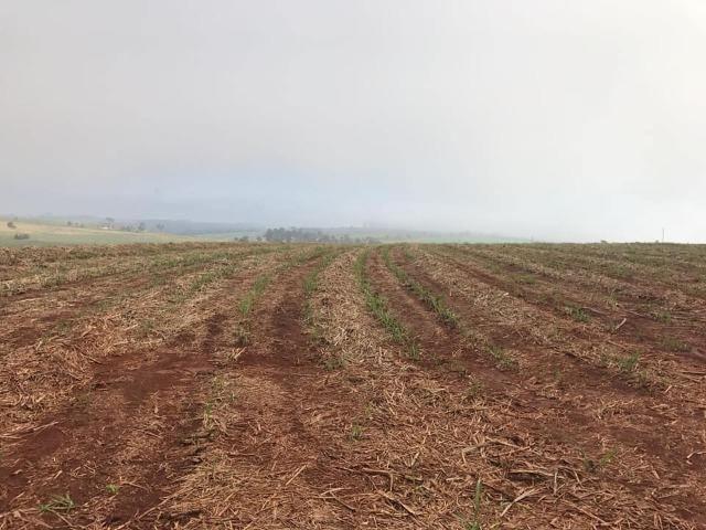 Fazenda 550 Alqueires. Região de Piracicaba-Sp - Foto 6