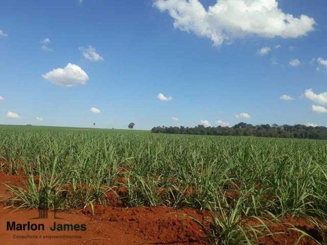 Fazenda para Plantio em Quirinópolis-GO! - Foto 7