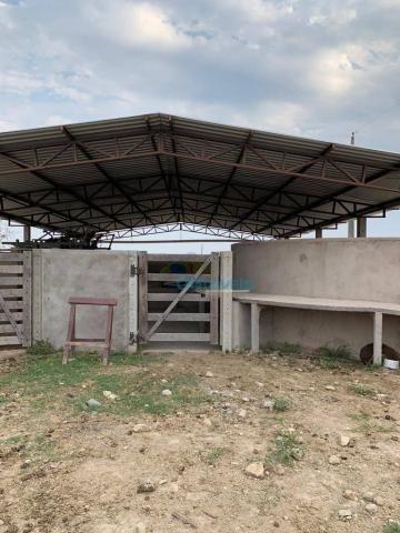 Fazenda a venda - área rural - Foto 4