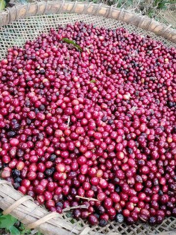 Micro lote 2020. Café  cultivado sem agroquímicos. - Foto 4