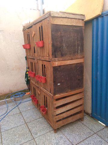 , gaiola com 6 repartimentos - Foto 2