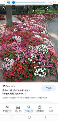 Mudas de beijo 5.00 várias cores  - Foto 2