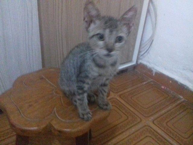 Doa-se gatinha filhote - Foto 3