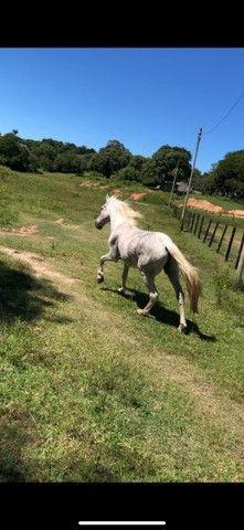 Cavalo Mangalarga Marchardor - Foto 2