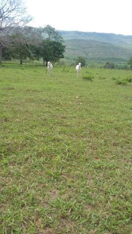 Fazenda 3288 ha terra Rosario Oeste MT braquearia 2020 cab boi R$ 6 mil reais p ha - Foto 11