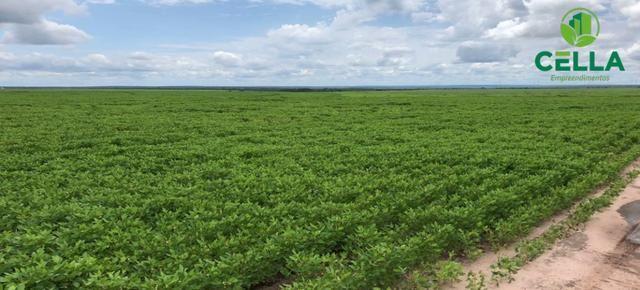 Fazenda / 4.639 ha (958 Alq.) / Balsas / Maranhão