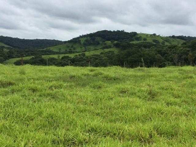 Fazenda rural à venda em Roncador - PR - 52 alqueires. - Foto 16