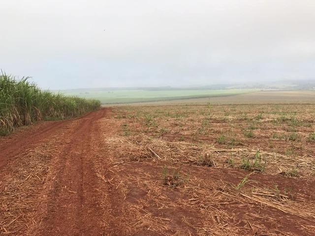 Fazenda 550 Alqueires. Região de Piracicaba-Sp - Foto 5