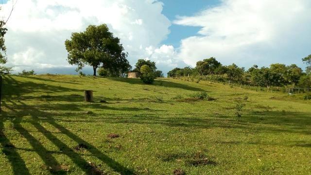 Fazenda 1450 hectare - Foto 4