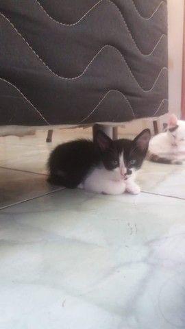 Gatinhos para adoção. Lindos e bem cuidados! - Foto 2